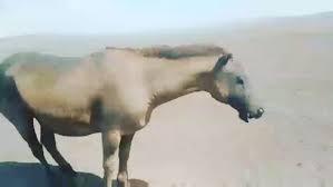 Горелое лошадко накануне пасех